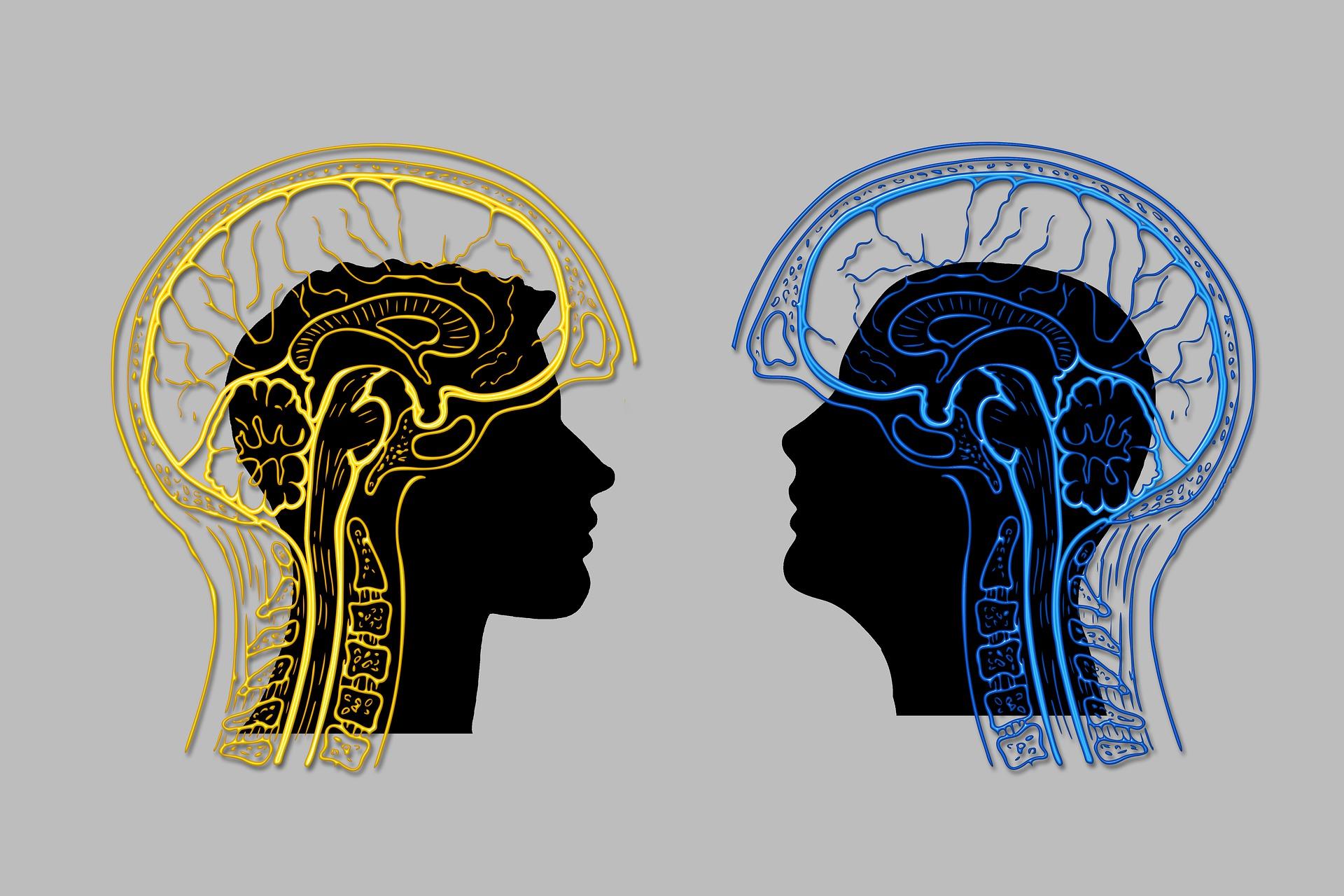 La risonanza magnetica e lo studio delle interazioni sociali