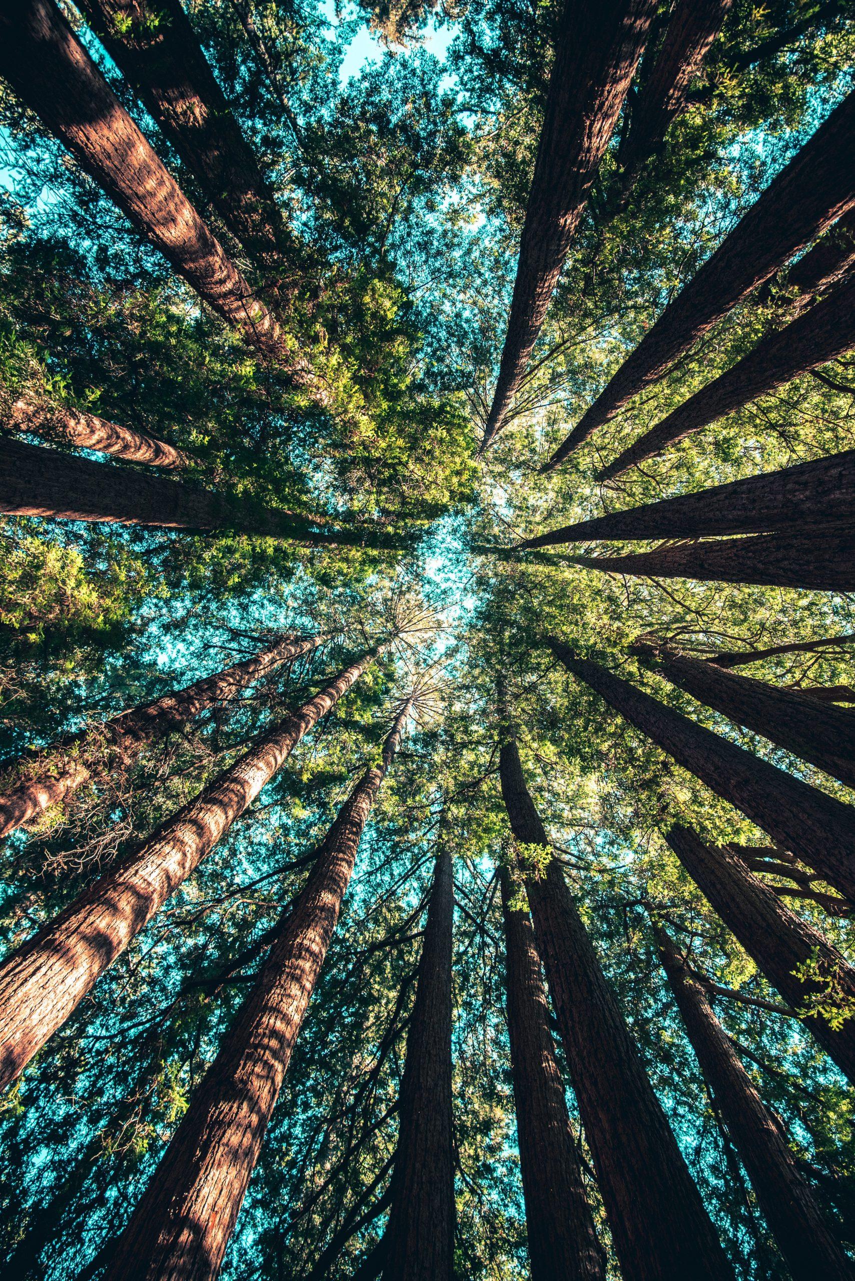 Cosa abbiamo imparato in trent'anni sul cambiamento climatico?